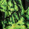 Зображення Puma Футболка з довгими рукавами PUMA x SANTA CRUZ Printed Long Sleeve Tee #3: Puma Black